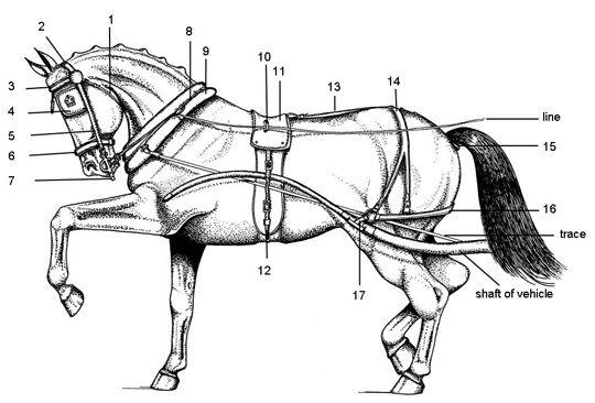 pony harness pads