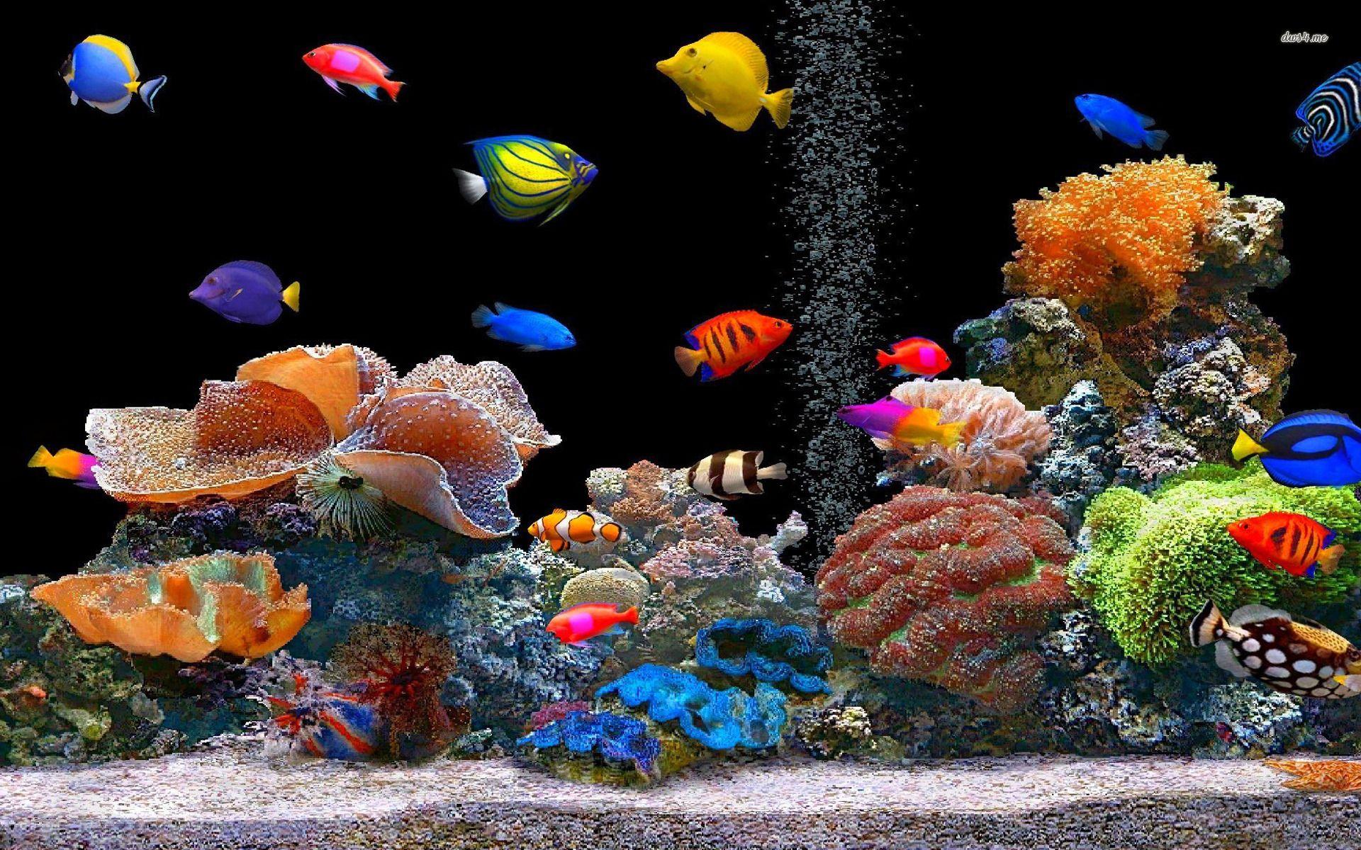 Coral Reef Wallpaper Hd Peces De Colores Hd Wallpaper Gratis Fondo De Pantallas