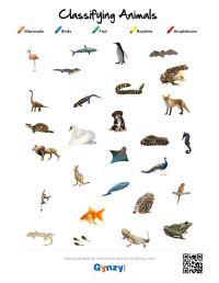 Mammal Reptile Worksheet Kindergarten. Mammal. Best Free ...