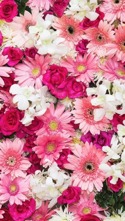 iPhone wallpaper flowers   Обои iPhone wallpapers   Pinterest   Wallpaper, Flower and Flowers
