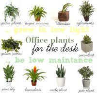 Best Plants For Office Cubicle. Indoor Plants Office ...