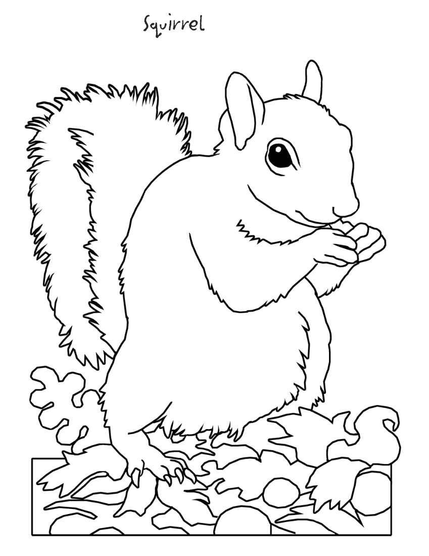 √ Backyard Animals and Nature Coloring Books Free Coloring