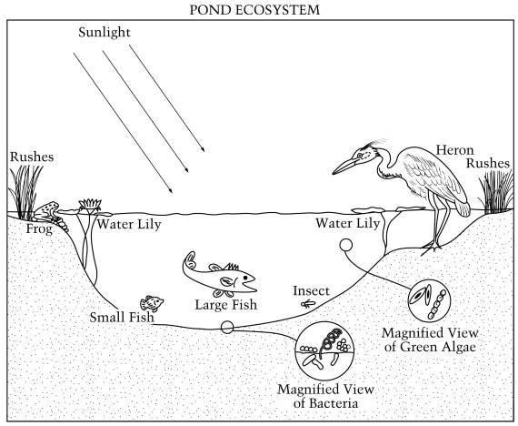 irrigation pond diagram