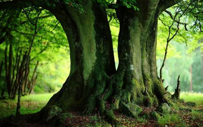 Green Trees Wallpapers - Full HD wallpaper search - page 2 | HUTAN | Pinterest | Wallpaper, Hd ...