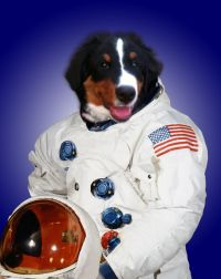 Dog Astronaut - Pics about space