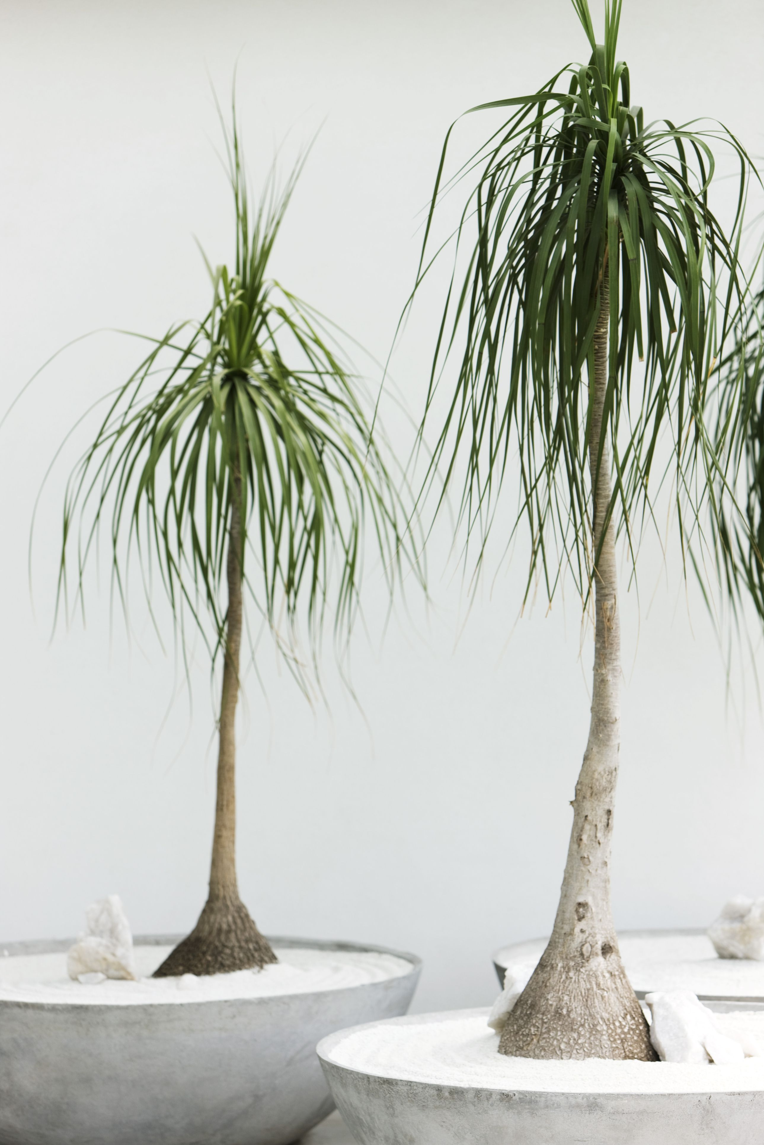Floor Plants Indoor The 25 Indoor Plants You Can 39t Kill Palm Window And Plants
