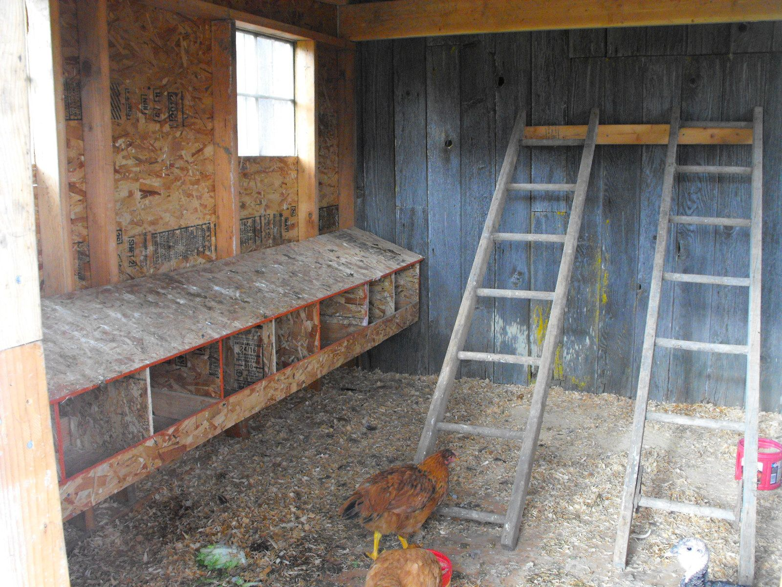 Diy Walk In Chicken Coop Chicken Coops Made Out Of Swing Sets And We Have A