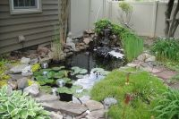 Backyard pond | Garden | Pinterest | Pond waterfall ...