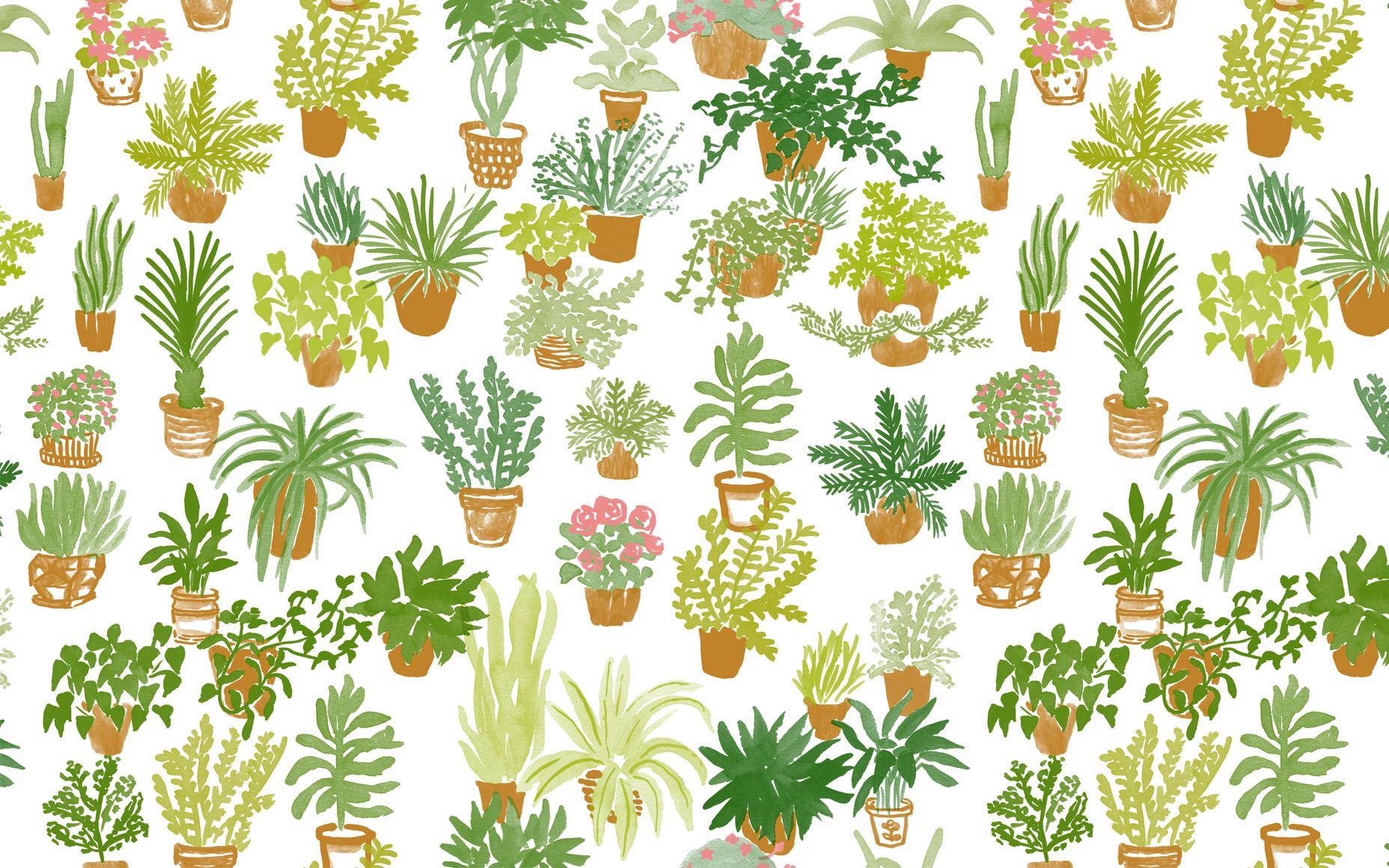 Cute Cactus Wallpaper Macbook 25 Wallpapers Lindos Pra Incrementar Seu Computador