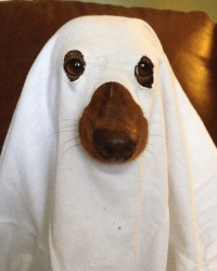 DIY Dog Halloween Costumes - Make your own Halloween ...