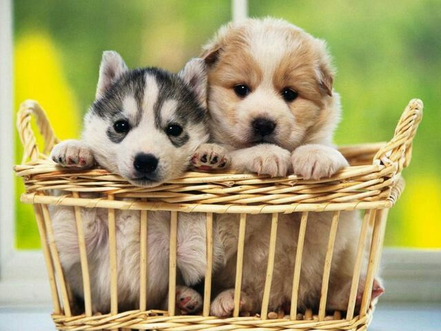 Cute Smile Wallpaper Dogs In A Basket Dogs And Cate Amp Others Living Creatutes