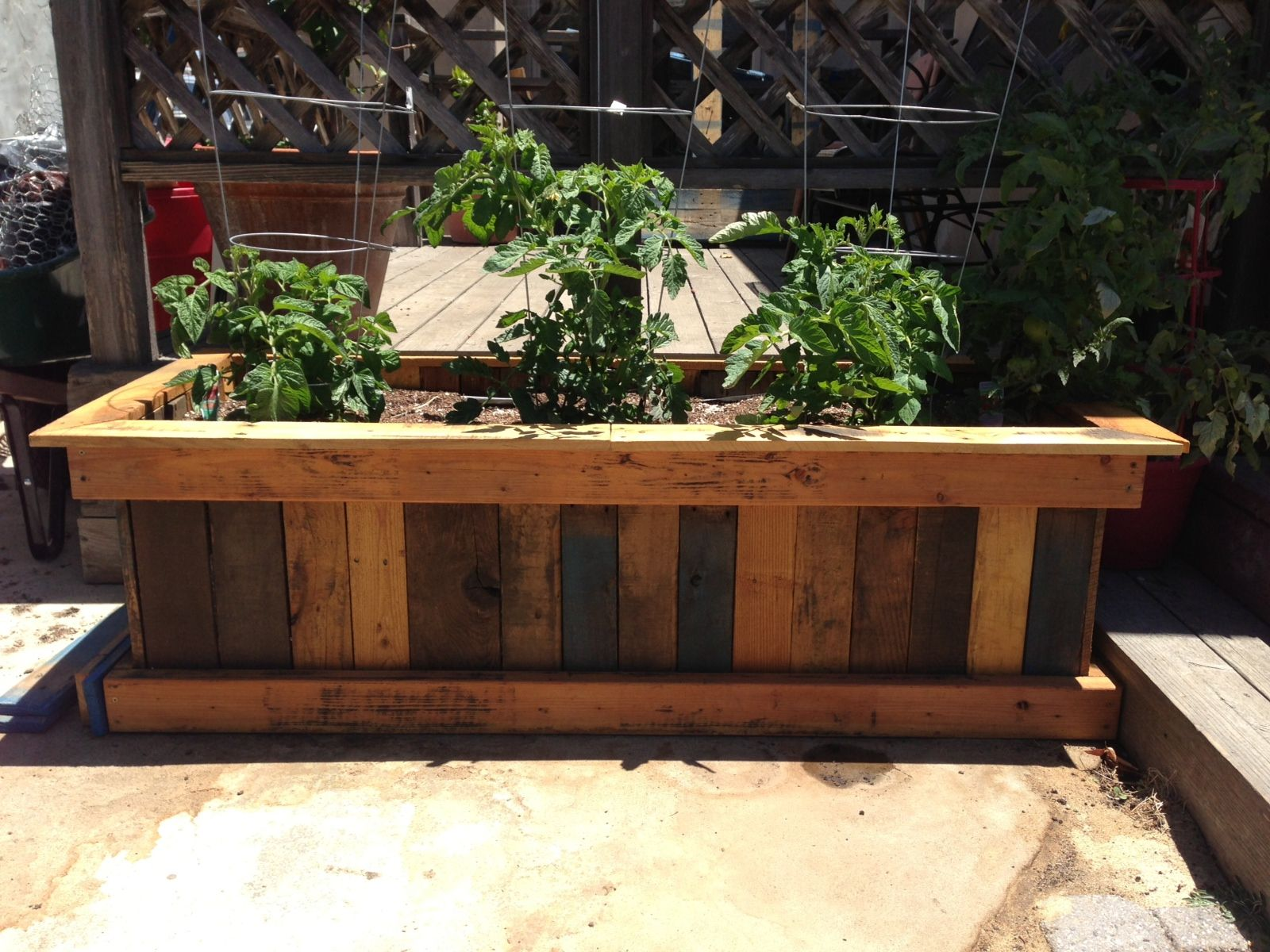 Box à Planter Pallet Planter Box And Organic Heirloom Tomatoes Home