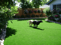 Beautiful landscaping ideas for small backyards with dogs ...