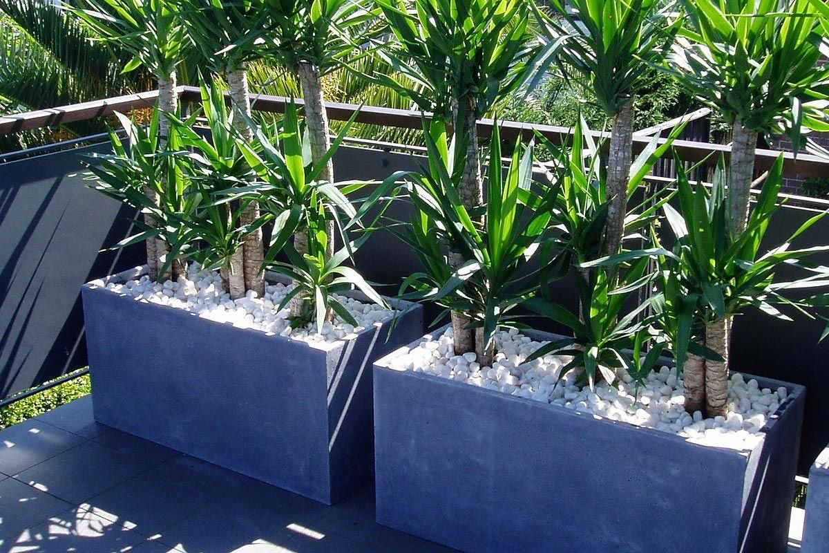 Balcony Privacy Plants Troughs Planted With Tall Yucca 39s Create Privacy