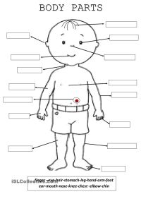 Body Parts | Edu. Activity ideas | Pinterest | Bodies ...