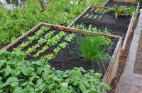 Terraced cedar-framed raised beds.   TERRACED   Vegetable ...