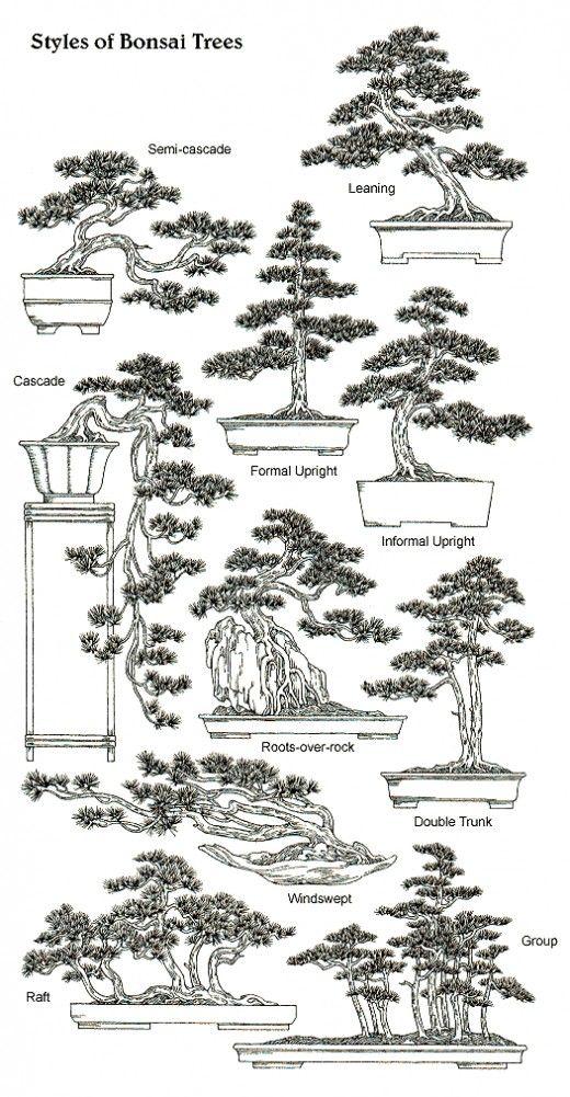air bonsai tree