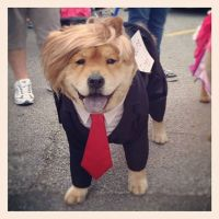 15 of the Best DIY Halloween Dog Costumes Out There | DIY ...