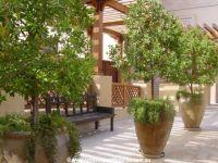 Large Pots - Landscape Ideas, Landscape Design Ideas ...