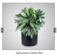 For my no window office: Cubicle Friendly Plants | Office ...