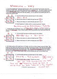 worksheet. Punnett Square Worksheet 1 Answer Key ...