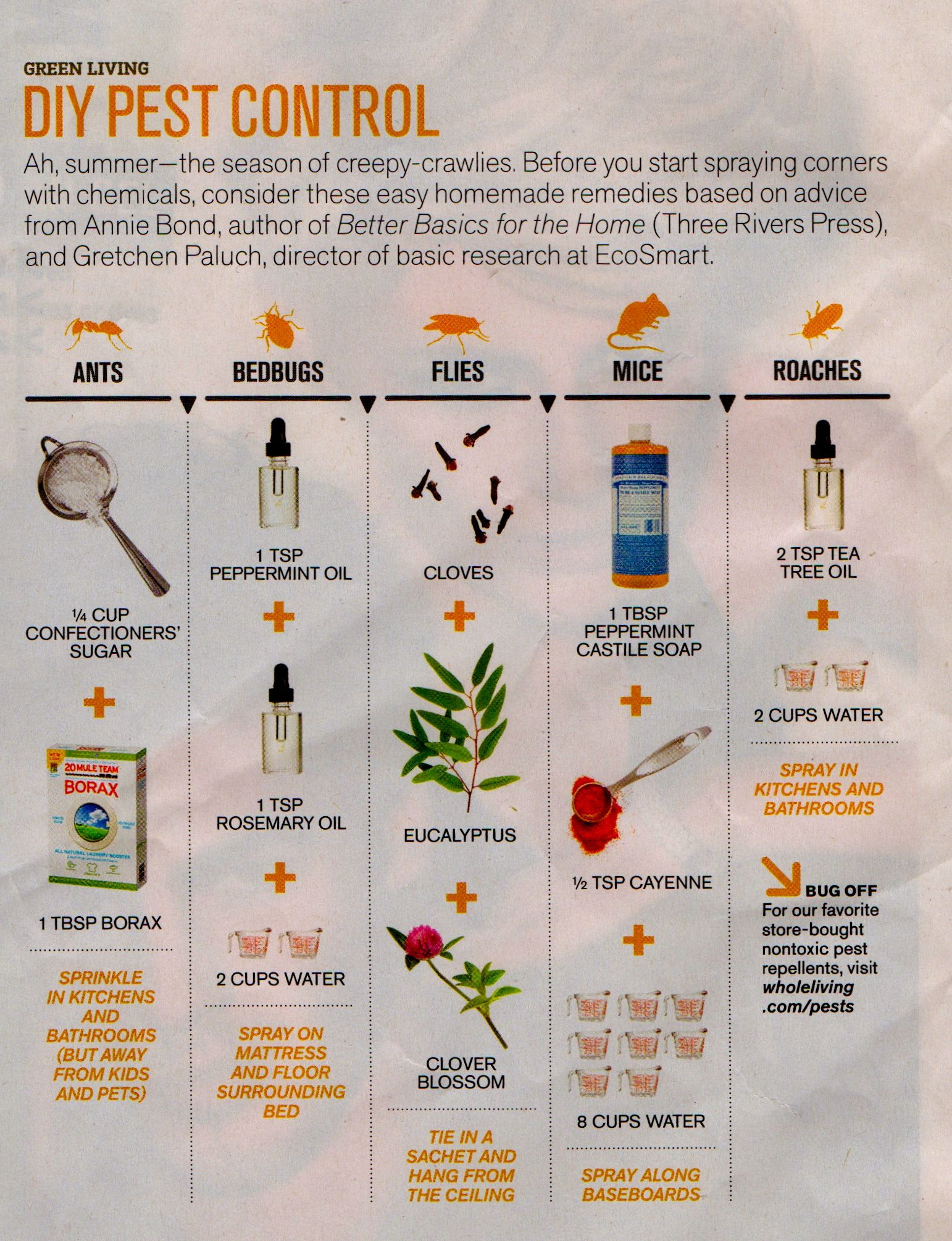 Diy Pest Control Spray Natural Diy Pest Control Happy Healthy Holistic