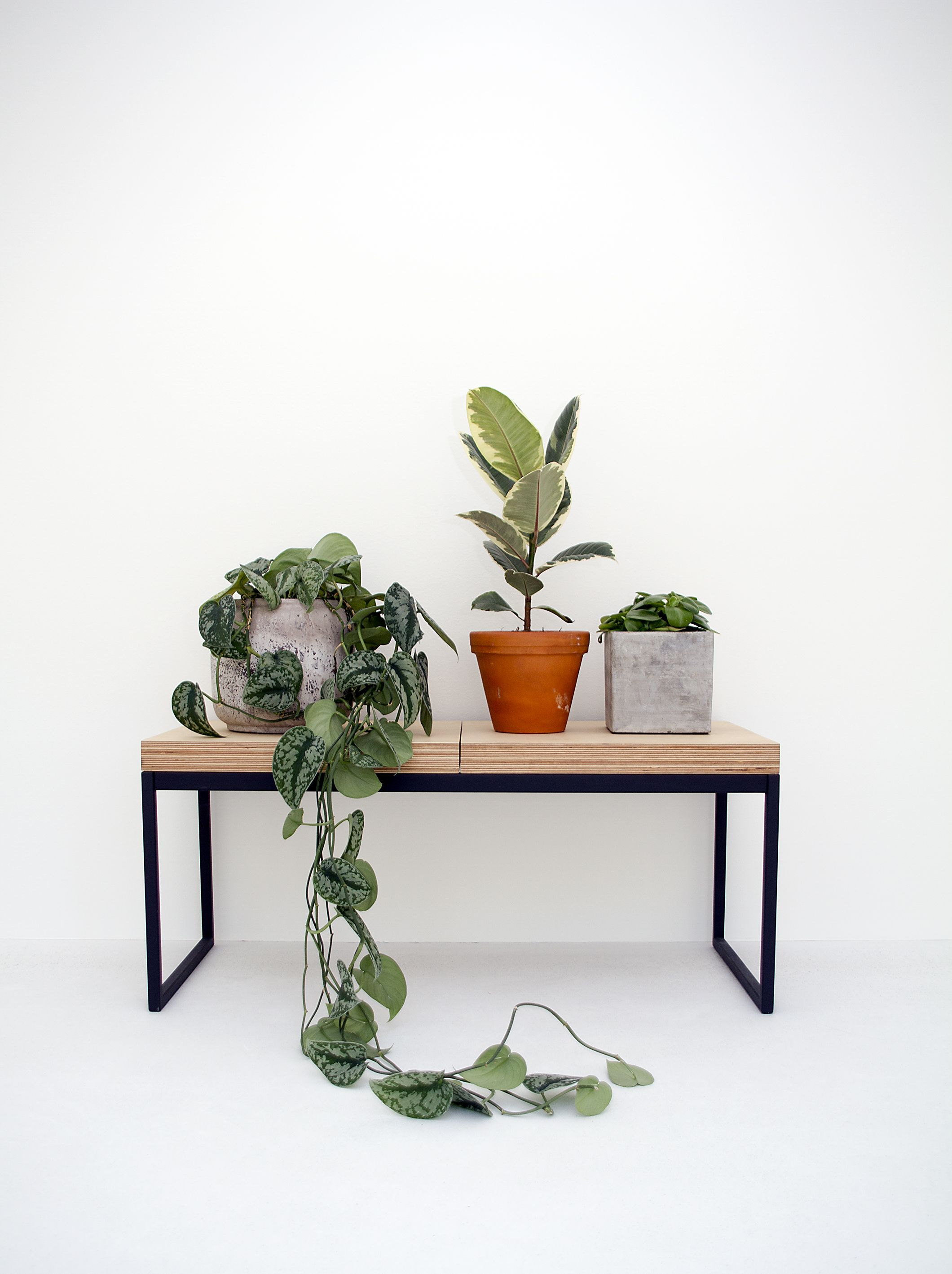 Plant Bench Indoor Indoor Plants And Potted House Plants On A Bench In A