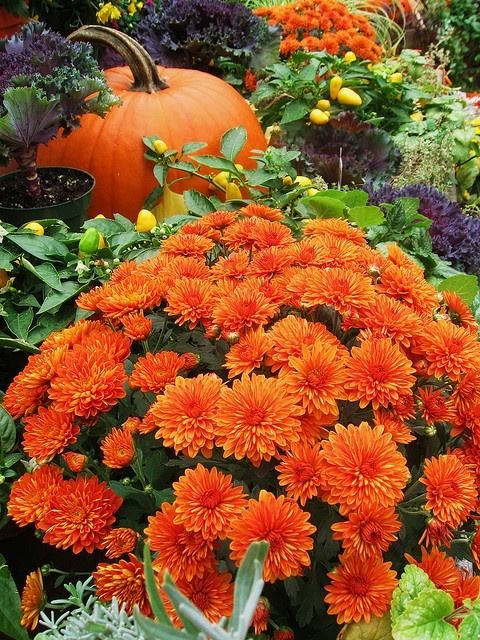 Country Quotes Wallpaper I Could Use A Love Song Mums And Pumpkins Autumn S In The Air Pinterest