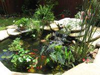 Cool pond plants