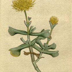 V 1 2 1787 1789 the Botanical Magazine or Flower Garden
