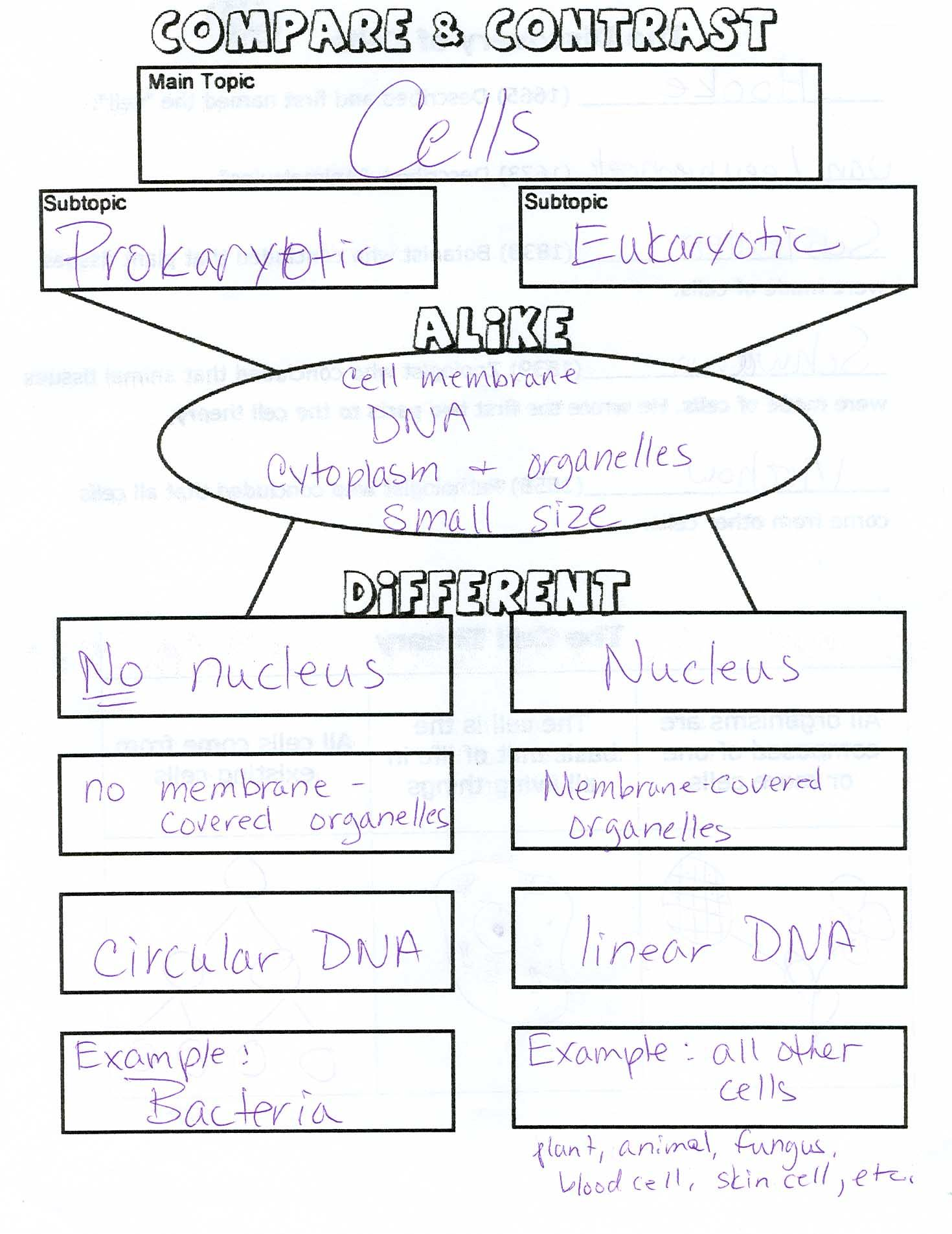 Prokaryotic and eukaryotic cell worksheet cockpito pictures prokaryotic and eukaryotic cell worksheet dropwin robcynllc Choice Image