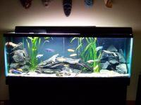 Aquarium Design Ideas - Home Design