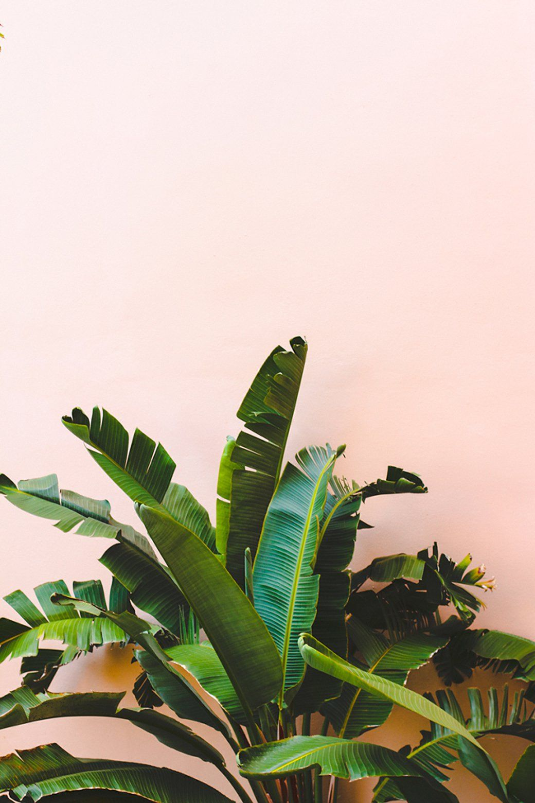 Plants Tumblr Trends 8 Leaves To Love 43 Tropical Leaf Decor Ideas