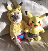 'Pokemon', French Bulldog in Costume.