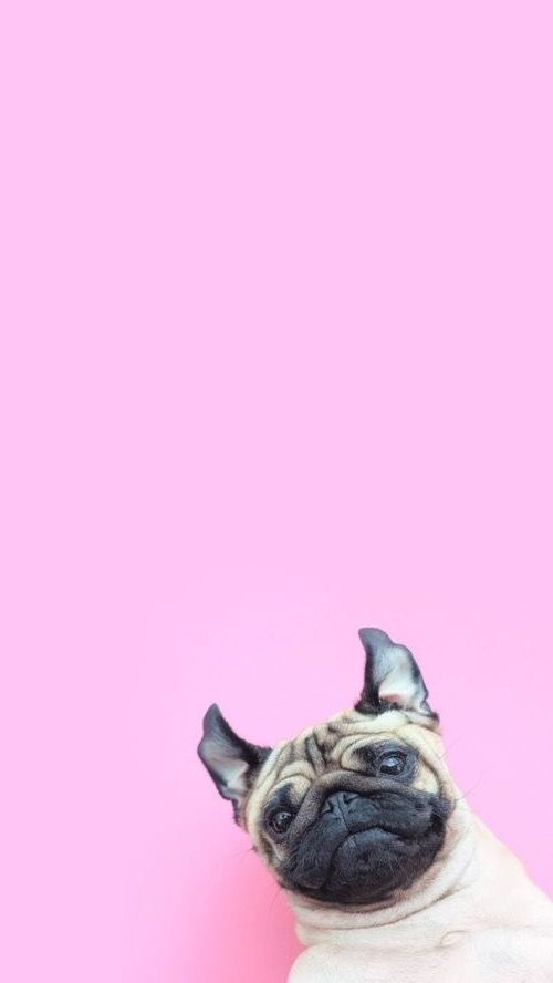 Cute Pug Wallpaper Cartoon Pin By Barbara Horv 225 Th On Backgrounds Pinterest