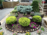 Shrubs For Landscaping