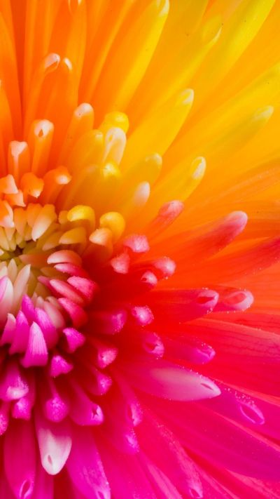 Colorful Tropical Flowers iPhone 6 Plus Wallpaper 21681 - Flowers iPhone 6 Plus Wallpapers ...