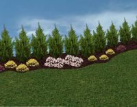 Privacy Landscaping Trees