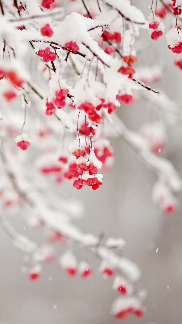 Cell Wallpaper Hd Illustration Fall Winter Fruit Iphone Wallpaper スマホ壁紙 Iphone待受画像ギャラリー