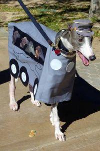 Greyhound bus costume, poor dog.   I will hug him and kiss ...