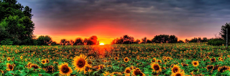 Fall Sunflower Desktop Wallpaper Field Of Sunflowers Twitter Header Cover Twitrheaders
