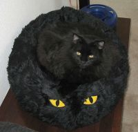 A black cat with yellow eyes on a pet pillow in this funny ...