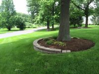 mulching around tree rings...for our front yard tree? | My ...