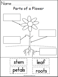 Students label the parts of a flower with this free cut ...