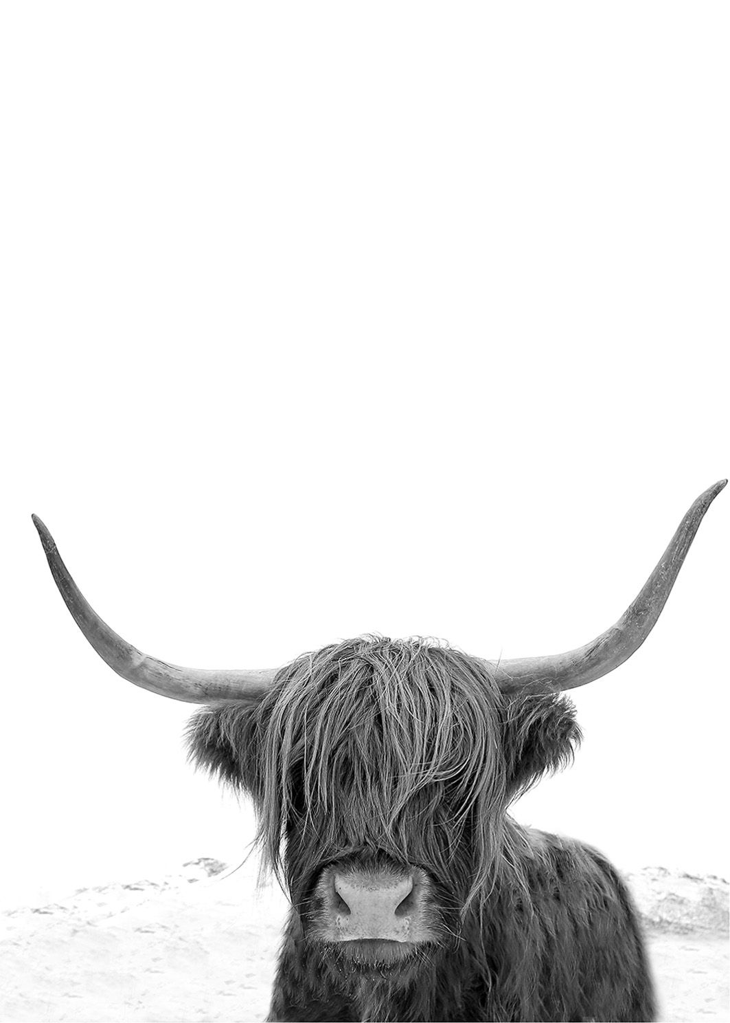 Large Black And White Posters Highland Cow Art Print Highland Cow Photography