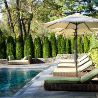 Privacy Trees, Thuja Emerald Green Pool Screen | Emerald ...