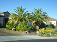 Beautiful front yard landscaping ideas with palm trees ...