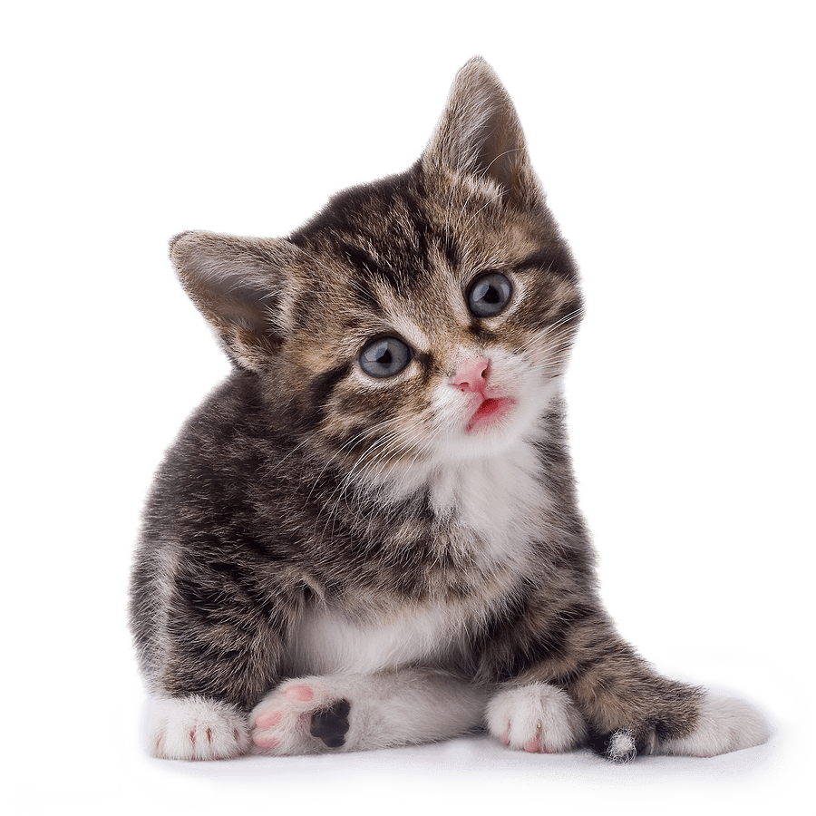 Cute Cats And Kittens Wallpaper Hd Cat Themes Cats Gallery Isolated Stock Photos By Nobacks Dallas