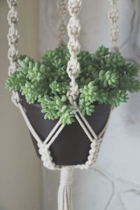 Our First Giveaway   Macrame plant hangers, Plant hangers ...