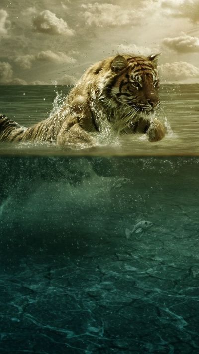 Tiger in Water #iPhone #5s #Wallpaper | http://www.ilikewallpaper.net/iphone-5-wallpaper, you ...